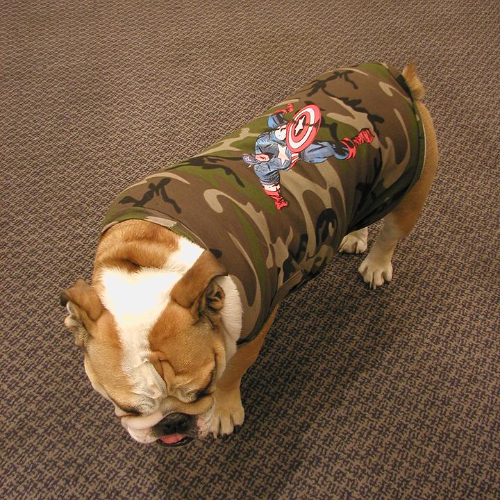 mcatt_bulldog.jpg