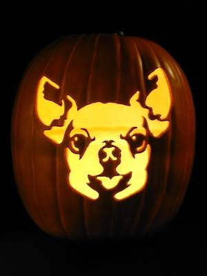 dog-chihuahua-2__________.jpg