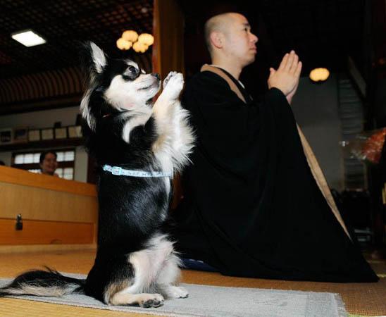 Buddha & Chi